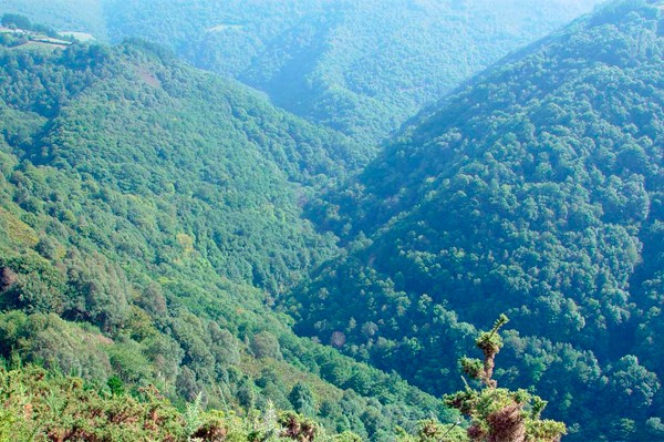 Valles y montes de los Oscos